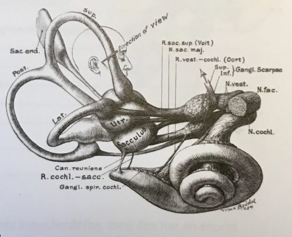 auriculoterapi-posturologi-kinesiologi-gedved